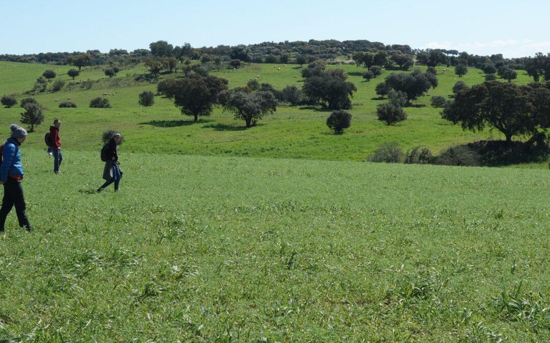 Online-Internships: Digital Field Survey Archaeology in Portugal