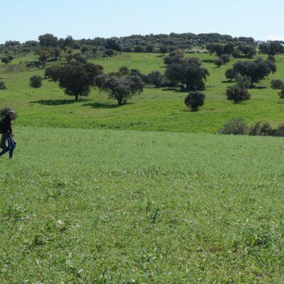 Tegel Stage Field Survey Archaeology